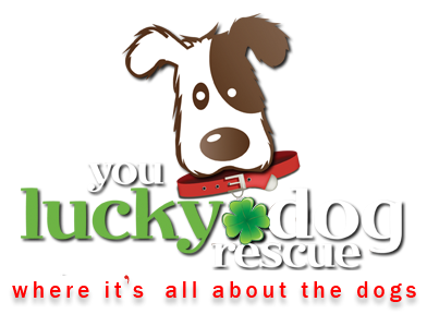 You Lucky Dog Rescue